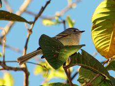 Alegrinho --{ Birds }--