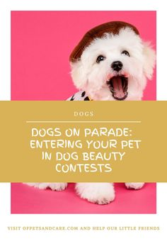 Dog lovers will surely be familiar with dog beauty contests. You might even have gone to several of these dogs on parade contests already. Pet Dogs, Pets, Beauty Contest, Your Pet, Dog Lovers, Friends, Amigos, Dogs, Boyfriends