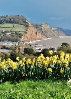 Sidmouth Devon Springtime Devon England, London England, Devon Uk, South Devon, Exeter England, Cool Places To Visit, Places To Go, Images Of England, Homes England