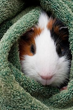Looks just like my piggy Lily