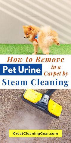 How to Remove Pet Urine in a Carpet by Steam Cleaning. Learning how to steam clean carpet to remove dog urine is important for keeping your home clean and smelling fresh. Deep Cleaning Tips, Cleaning Checklist, House Cleaning Tips, Cleaning Hacks, Rug Cleaning, Bedroom Cleaning, Laundry Stain Remover, Stain Remover Carpet, Stain Removers