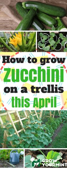 Growing Zucchini in Small Spaces By simply using an inverted (aka ...