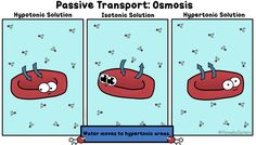 A little osmosis..in a GIF! By The Amoeba Sisters