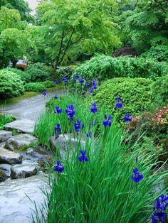 blue irises by joyce