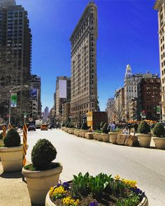 Spring has arrived to New York