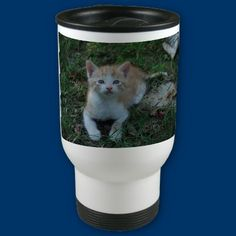 The mug of the curious kitty by catphoto