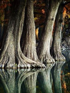 Trees & water