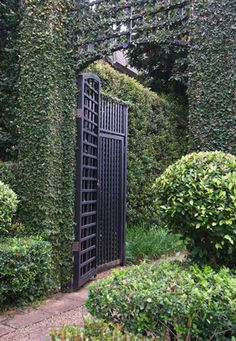 Garden Design Decking Creeping Fig - maybe this on a trellis to hide the parking area? Formal Gardens, Outdoor Gardens, Dream Garden, Home And Garden, Landscape Design, Garden Design, My Secret Garden, Garden Structures, Outdoor Structures