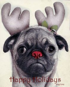 The Pug nosed reindeer