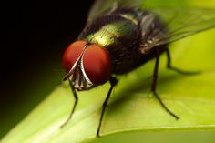 The Green Fly. Photo by Chris Crowder.