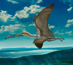 Gladocephaloideus is a genus of gallodactylid ctenochasmatoid pterosaur from the Early Cretaceous of western Liaoning, China. Art by Chuang Zhao