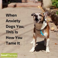 When Anxiety Dogs You, This Is How You Tame It #anxiety #mentalhealth