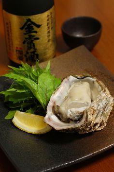 Akita Oyster