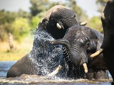 "56 Likes, 2 Comments - Gabi Guiard Photography (@gabi_guiard) on Instagram: ""Having fun! #wildlifephotography #animal_sultans #wildlifephotographer #safari #photosafari #africa…"""