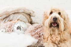 Documenting Daisy: One Photographer's Search for a Dog… on Set via Brit + Co