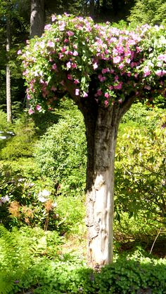 Now this is a story all about how, these trees got flipped, turned upside-down. garden videos Glacier Gardens Upside Down Trees in Alaska Small Cottage Garden Ideas, Unique Garden, Garden Cottage, Small Garden Trees, Country Garden Ideas, Colorful Garden, Small Trees, Amazing Gardens, Beautiful Gardens