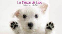 Sur La Maison de Lilou, vous pouvez trouver un collier avec strass ou un harnais pour votre petit chien. Mignons et pas chers.