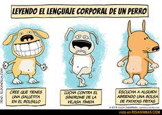 Lenguaje corporal del perro.