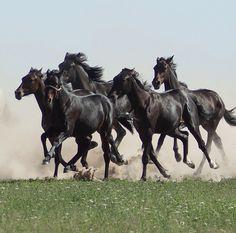 Herd of horses. - Horses - by Viktor Yastrebov