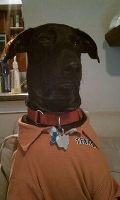 Texas Exes Pets with Pride Photo Contest Hook Em Horns 8127ba8d7
