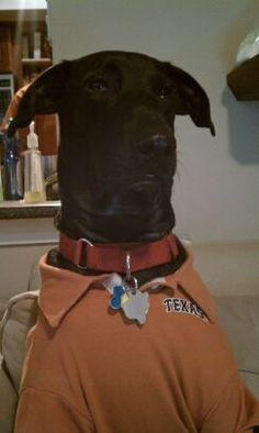 Texas Exes Pets with Pride Photo Contest