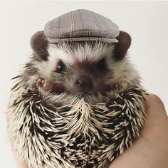 Hedgehog Holmes! If you need information just ask to our true dedective...