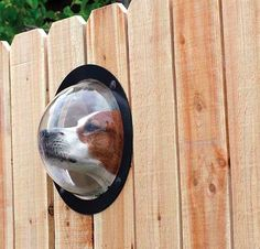 """""""Pet Peek"""" Dome Window for Dogs.    Dogs are rather curious creatures by nature they love to stick their nose whenever they can. The Pet Peek is a hard acrylic dome window that is 9.5 inches in diameter that will give ample room for your furry friend to poke his head through and drool while watching the squirrels across the street. One of these windows runs about $35, and is easily installed into wood or vinyl fences."""