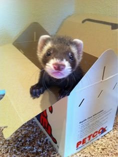 There Aren't Enough Ferrets