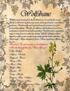 Book of Shadows: Herb Grimoire - Wolfsbane by CoNiGMa on DeviantArt