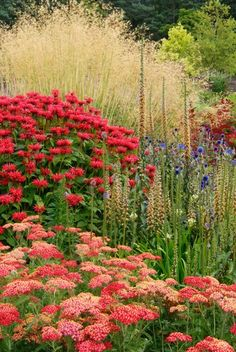 Gold-Red. Monarda with ornamental grass and achillea.