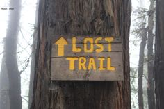 Lost Trail in Muir Woods #losttrail #lost #trail #muirwoods #redwood #redwoods #hike #hiking #california