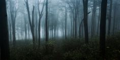 Spooky forest by Denes Kiss on 500px