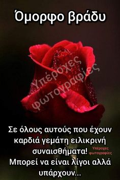 Beautiful Pink Roses, Good Night Messages, Random, Good Evening Messages, Good Night Text Messages, Casual