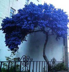 Isso sim, é que é uma bela árvore.
