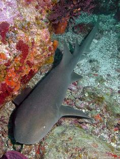 Nurse Shark, dove with 10 or 12 of these friends in Belize! Their skin is like sandpaper(: