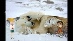 Fun Facts About Polar Bear. A Kids video book about polar bears. Learn How to get free kindle Kids books directly from Amazon at http://AReadingPlace.com/pol...