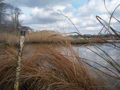 Duck Hunting Long Island NY