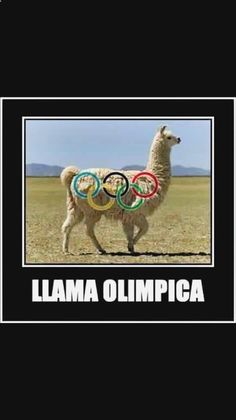 #(@_@)# Pásala bien con lo mejor en imagenes divertidas con frases para el facebook, gifs animados verano gratis, chistes de jaimito jocosos, chiste olimpico y memes de pena nieto. ➟ http://www.diverint.com/memes-chistosos-espanol-mala-noticia-krilin/