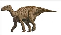 Iguanodon (禽龍) were large, bulky herbivores (食草動物). Distinctive features include large thumb spikes, which were possibly used for defense against predators.