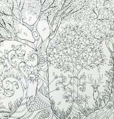 titkos kert kifestő - Google keresés