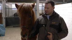 Auf dem Gelände der Holstenhallen in Neumünster präsentierten Züchter mehr als 100 Hengste für die Aufnahme als Zuchthengst ins Pferdestammbuch.
