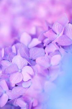 Purple flowers my favourite colour Purple Love, All Things Purple, Purple Rain, Shades Of Purple, Purple Style, Pastel Purple, Purple Flowers, Beautiful Flowers, Purple Hydrangeas