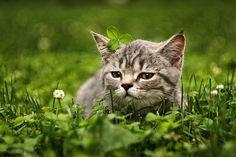 cool photo kitten clover