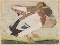 Two Mallard Ducks  Indian Mughal, about 1620 Patron Jahangir, Attributed to Mansur (Indian, active about 1590–1625 Indian)