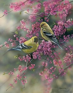 Goldfinches and Redbud by Rosemary Millette