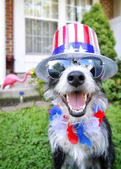 42 Best Dog Birthday Ecards Images