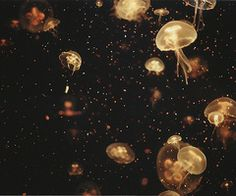 ever wondered if the stars in the sky were actually just millions of little galaxy jellies swimming around the Earth? I have <3