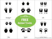 Animal Tracks Learning Material