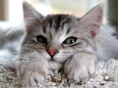 My sweet little kitten… lol