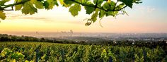 Farm To Table In Vienna: The Unique Beauty Of Europe's Last Great Urban Vineyards